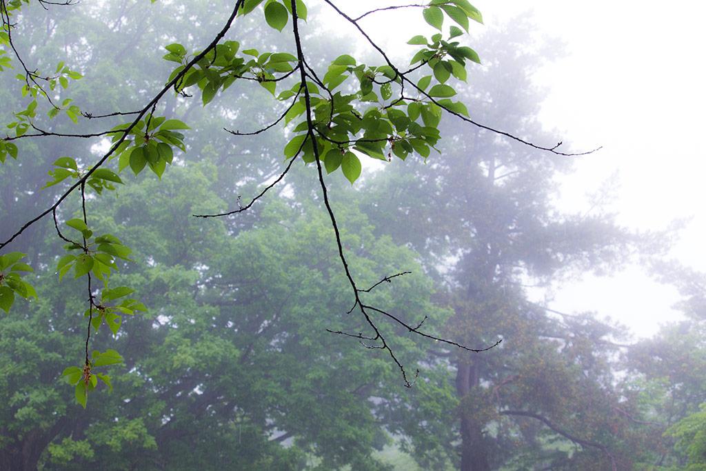 雨でしっとり緑