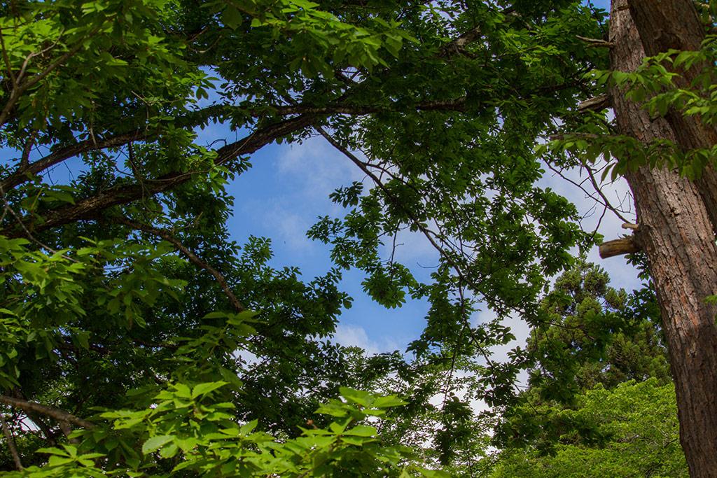 THE 津軽森な空